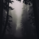 forest, tree, fog, overcast, dark, nature wallpaper