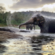 nature, animals, elephant, pond, bathing, spray wallpaper