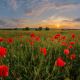 field, poppy, poppies, sky, sunset, nature wallpaper