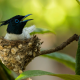 bird, branches, leaves, nest, flycatcher wallpaper