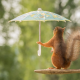 animals, squirrel, funny, umbrella wallpaper