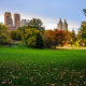 central park, manhattan, new york, city, nature, park, trees, grass, leaves, leaf fall wallpaper