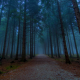 forest, tree, mist, fog, forest road wallpaper
