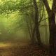 forest, mist, trees, fog wallpaper