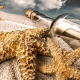 sand, beach, bottle, starfish, message in a bottle wallpaper