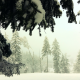 winter, snow, nature, spruce, branches wallpaper