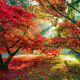 trees, forest, sun rays, fall, leaves, red leaves wallpaper