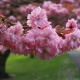 nature, spring, branch, flowers, bloom, park, sakura wallpaper