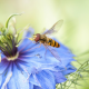 macro, nature, flowers, bee, insect wallpaper