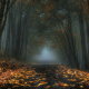 nature, landscape, mist, road, forest, leaves, fall, trees, dark, morning wallpaper