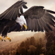 birds, bird, eagle, nature, mountains, rocks, forests, bald eagle, animals wallpaper