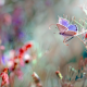 nature, grass, butterfly, macro, insects, nature wallpaper