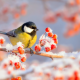 birds, tit, nature, winter, branch, berries, hoarfrost, frost, animals, snow wallpaper