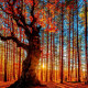 forest, tree, sun, rays of the sun, nature wallpaper