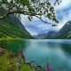 nature, landscape, lake, wildflowers, trees, Norway, grass, clouds, summer, water wallpaper