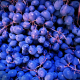 grapes, harvest, october, food wallpaper