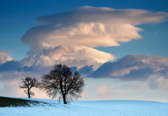 snow, winter, field, landscape, tree, clouds, nature wallpaper