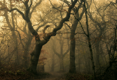 mist, forest, path, leaves, fall, dark, trees, shrubs, nature, landscape wallpaper