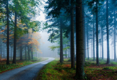 mist, road, forest, landscape, nature, tree, sunlight, atmosphere wallpaper