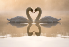 swans, love, birds, nature, animals, reflection, pond, lake, fog wallpaper