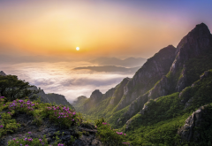 South Korea, sunrise, mountains, nature, landscape, wildflowers wallpaper