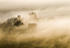 fog, tree, hut, grass, nature, landscape wallpaper