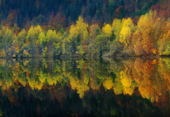 lake, reflection, nature, autumn, water, forest, landscape, tree wallpaper