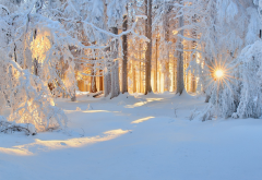 winter, nature, forest, snow, landscape, tree, sun rays, frost wallpaper