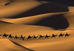 camel, Morocco, Africa, nature, animals, sand, desert, dune wallpaper