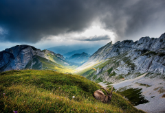Switzerland, clouds, hill, grass, animals, chamois, nature, mountains wallpaper