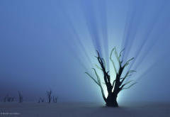 namibia, africa, nature, tree, branch, desert, night, lights, mist, mysterious wallpaper