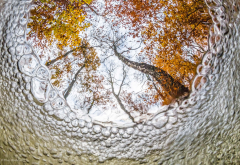 nature, tree, underwater, bubbles, leaves, fall, forest, fisheye lens wallpaper