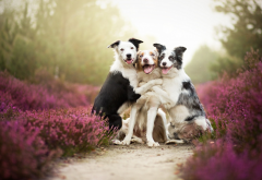 Friends, dogs, flowers, mist, animals, nature, pets wallpaper