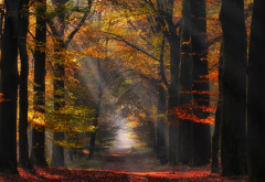 autumn, leaf, alley, nature, path, sun rays, netherlands, tree, sunlight, forest, leaves wallpaper