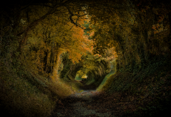 fall, road, autumn, alley, tunnel, nature wallpaper