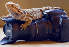 Canon EOS 20D, animals, reptiles, lizards, skin, cameras, lenses, Canon, closeups, photography wallpaper