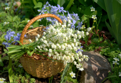 basket, flowers, lily of the valley, periwinkle, nature wallpaper