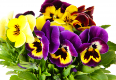flowers, pansies, wild pansy, viola tricolor, heartsease, hearts ease, hearts delight, tickle-my-fancy, jack-jump-up-and-kiss-me, come-and-cuddle-me, three faces in a hood, or love-in-idleness, nature wallpaper