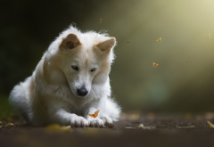 dog, butterfly, animals, insects wallpaper