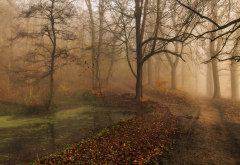 nature, landscape, morning, fall, mist, park, trees, path, leaves, ponds, water wallpaper