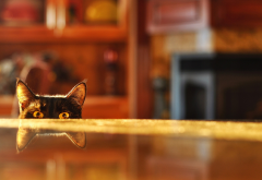 cat, reflections, cat ears, funny, animals wallpaper