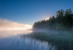 landscape, nature, lake, mist, sunrise, forest, water, reeds, trees, Russia wallpaper