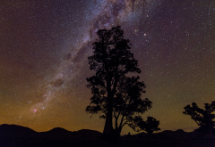 milky way, stars, tree, silhouette, night, space wallpaper