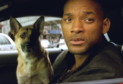 i am legend, will smith, robert neville, dog, movies, animals, actor, men wallpaper