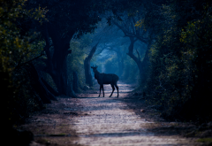 deer, path, tree, forest, fog, wildlife, nature wallpaper