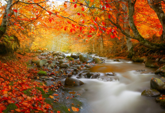 nature, autumn, romania, forest, tree, creek, leaves, stones, leaf, stream wallpaper