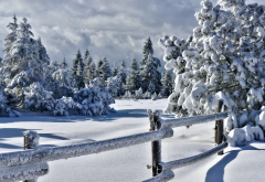 winter, trees, snow, frost, fence, nature wallpaper
