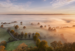 fog, morning, nature, trees, fields wallpaper