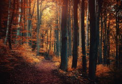 nature, forest, path, fall, landscape, leaves, trees, shrubs, sunlight, fairy tale wallpaper