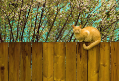 cat, red, fence, flowers, bloom, spring, animals wallpaper